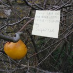 Post-It series, Somerset garden 2005